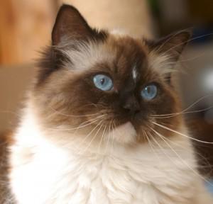 Kittyrags Baba Yaga